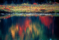 Reflection of Color, Acadia