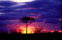 cloud, serengeti, sky, sunset, tanzania, color, africa, safari, art, photo, photograph, photography, landscape, nature, tree, acacia