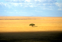 acacia, africa, cloud, serengeti, sky, tree, tanzania, photo, photograph, photography, landscape, art, top, best, safari
