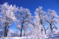 boulder, colorado, cottonwood, sky, snow, tree, travel, nature, landscape, winter, scenic, art, photo, photograph, photography