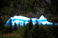 alaska, forest, ice, iceberg, portage, lake, glacier, landscape, nature, art, photo, photograph, photography